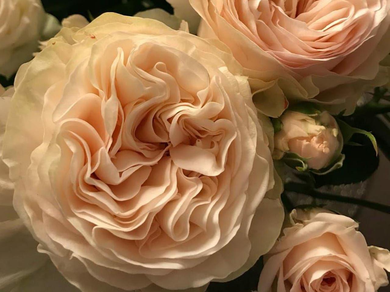 Розы разных сортов