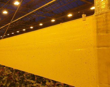 Рулонные ловушки Желтые 100*30