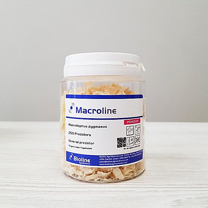 Макролофус