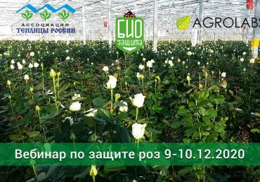 """Бесплатный online-вебинар по защите роз: """"Современный подход к вопросам защиты роз, выращиваемых на срезку, от болезней и вредителей"""""""