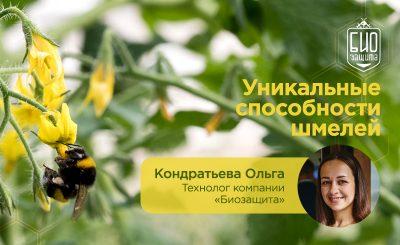 Кондратьева шмели